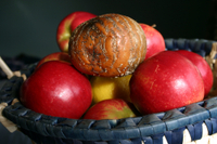 Rotten_apple_shutterstock_1903498